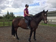 Lovely 16. 1hh ISH gelding, well schooled