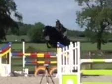 Showjumper and RC/PC fun horse