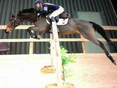 Amazing all rounder pony for sale