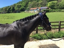Stunning pony for sale