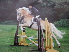 Super Talented Palomino