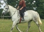 All Rounder Cob Mare
