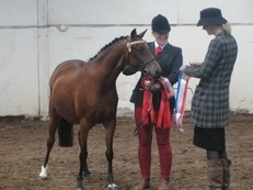 Multi talented competition pony