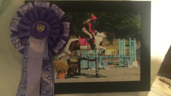 14 hh Showjumping Pony