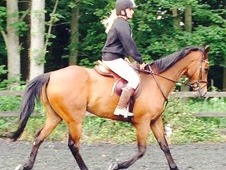 16. 2 TB for loan - dressage prospect