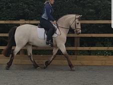 13. 3hh quality all rounder