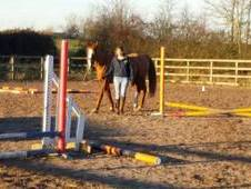11yo Warmblood x Welsh Part Bred Show Jumper