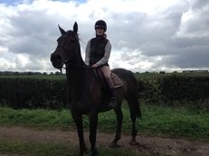 16hh ex-racehorse and companion to loan (free to a good home)