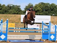 Stunning 9 year old Bay Gelding