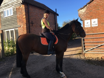 Flashy kind 14 year old 16.2 bay gelding ID
