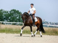 STUNNING PRE DRESSAGE PROSPECT FROM FAMOUS ESCALERA BLOODLINES