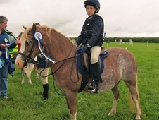 Welsh section A chestnut roan mare