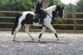 Horses for Sale in West Sussex | Horsemart