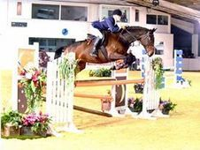 Allround competition horse