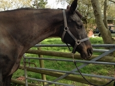 Horse for loan west sussex