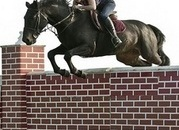 new videos - Quality Scopey 16.1hh ISH Hunter/Showjumper/Eventer