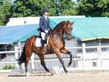 Striking, talented KWPN Gelding