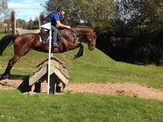 All rounder 16.1hh 13 yr  Bay TB mare
