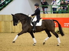 Performance Stallion at Stud