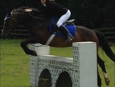 14. 3HH BAY MARE LOAN WITH A VIEW TO BUY