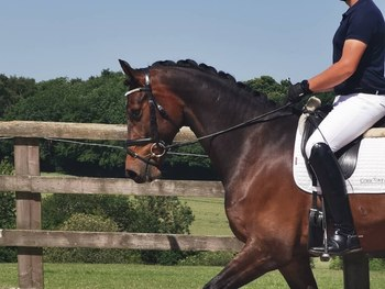 STRIKING, TALENTED AND SAFE 4 YR OLD GELDING BY FIRESTONE