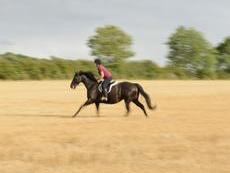 Stunning Black 16.1hh TB Mare rising 9 years old