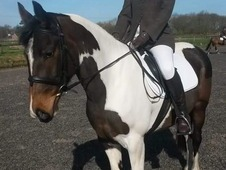 STUNNING Mare for part loan