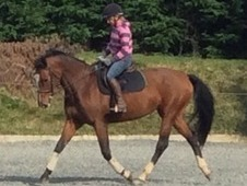 9yr old, Pink Papered AES Mare