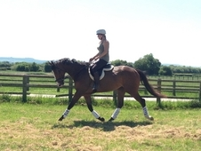 Selection of ROR horses for sale