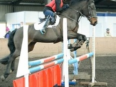 STUNNING AND FAB 138 JUMPING PONY FOR SALE