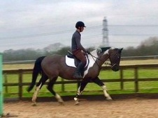 15. 2hh Coloured Mare