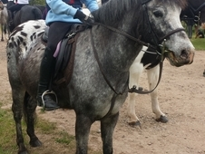 Attractive looking lead rein pony