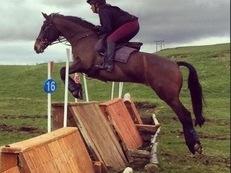 Super talented all round/competition/ event horse