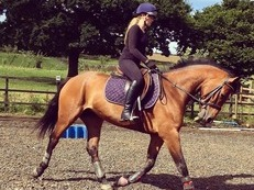15.2, 5 yr old serious allrounder / potential BE prospect