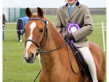 Fantastic all rounder pony