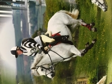 14. 3hh, Ex- Hunting Pony Loan