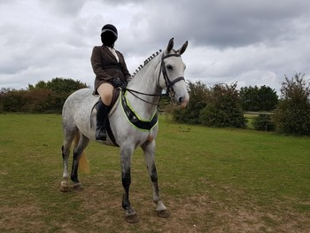 Irish sport horse with great potential