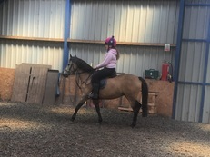 12hh3 9 year old Dun Mare.