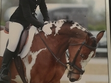 XC Machine Dressage Queen