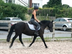 6 year-old - Welsh X - All Rounder - Mare - 14.2 hh - West Yorkshire