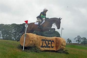 Quality 16.2 Bay Gelding with Grass Routes and Novice 1* Potential.