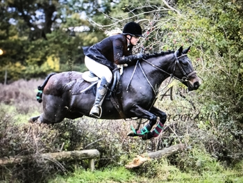 13.2hh 8yrs Reg New Forest Mare super smart competition pony