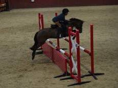 Stunning fun second pony or lead rein pony