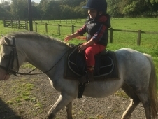 Lead rein / 2nd pony / can be ridden off lead