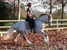 Pretty dressage mare, lovely paces, low mileage with great breedi...