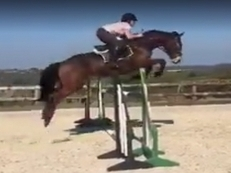 Smart 16hh Bay Mare FOR SALE