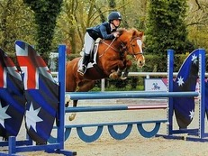 138cm Show Jumping Pony (Ping)
