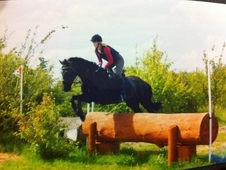 Share/Part Loan - Stunning 16. 3hh Thoroughbred
