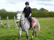 14. 3hh 9yr old New Forest Gelding for Loan