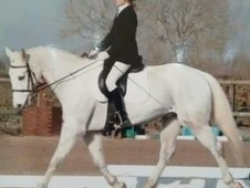 15. 2hh gelding for share/part loan